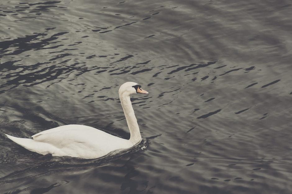 animal, bird, elegance