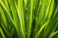 plant, green, close-up