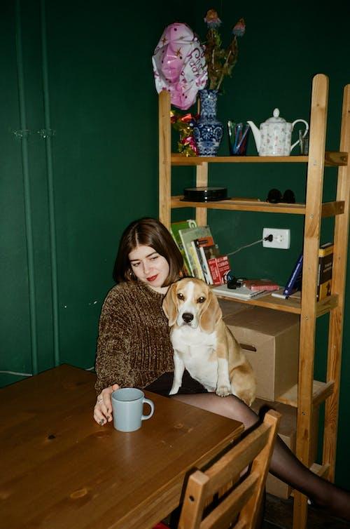 Gratis stockfoto met beagle, beagle hond, binnen