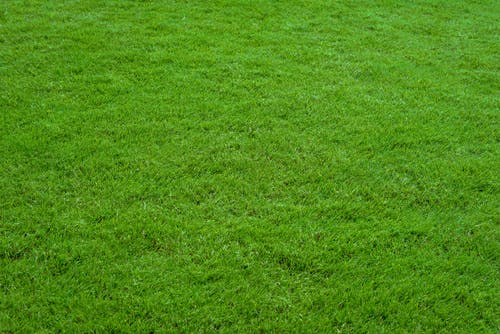 Free stock photo of background, closeup, garden, grass