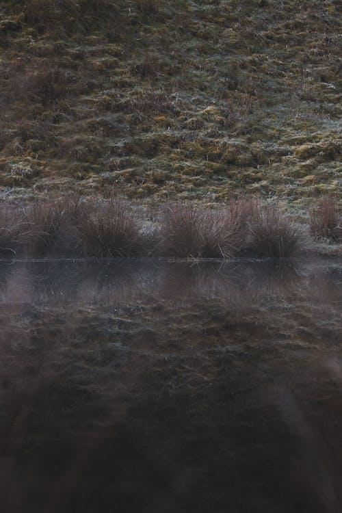 Free stock photo of dew, grass, swamp, wetlands