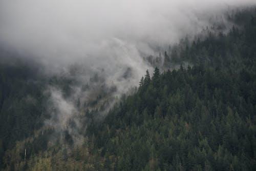 Kostenloses Stock Foto zu bäume, berg, bewölkt, dämmerung