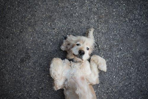 Foto profissional grátis de acasalar, adorável, andar, animal