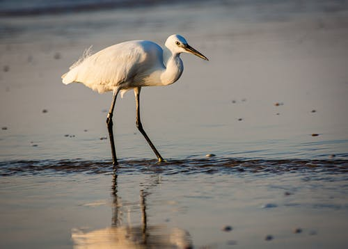 White Bird on Water