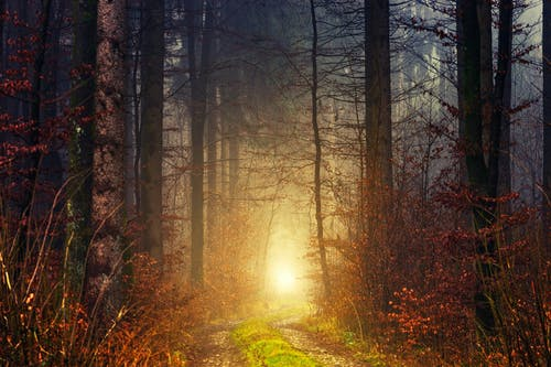 Spectacular view of colorful sunrise in silent forest with growing trees with dry branches between path with grass