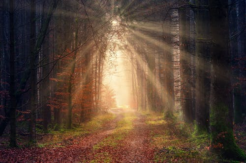 Bright sunbeams illuminating forest path at dawn