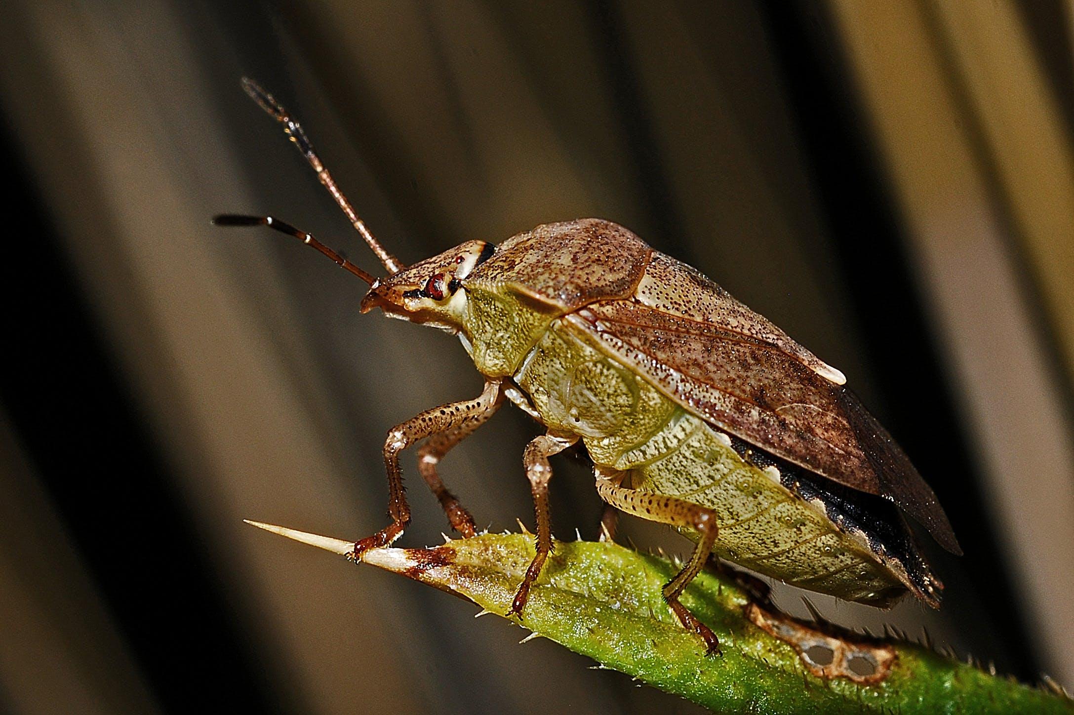 Kostnadsfri bild av insekt, makro, närbild, natur