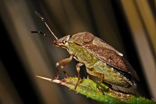 Gratis stockfoto met close-up, insect, kever, macro