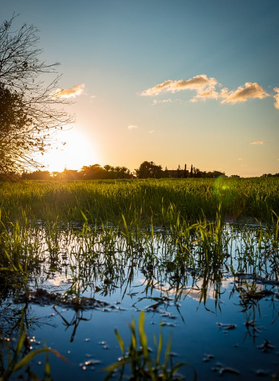 Green Grass Field Near Body of Water during Sunset