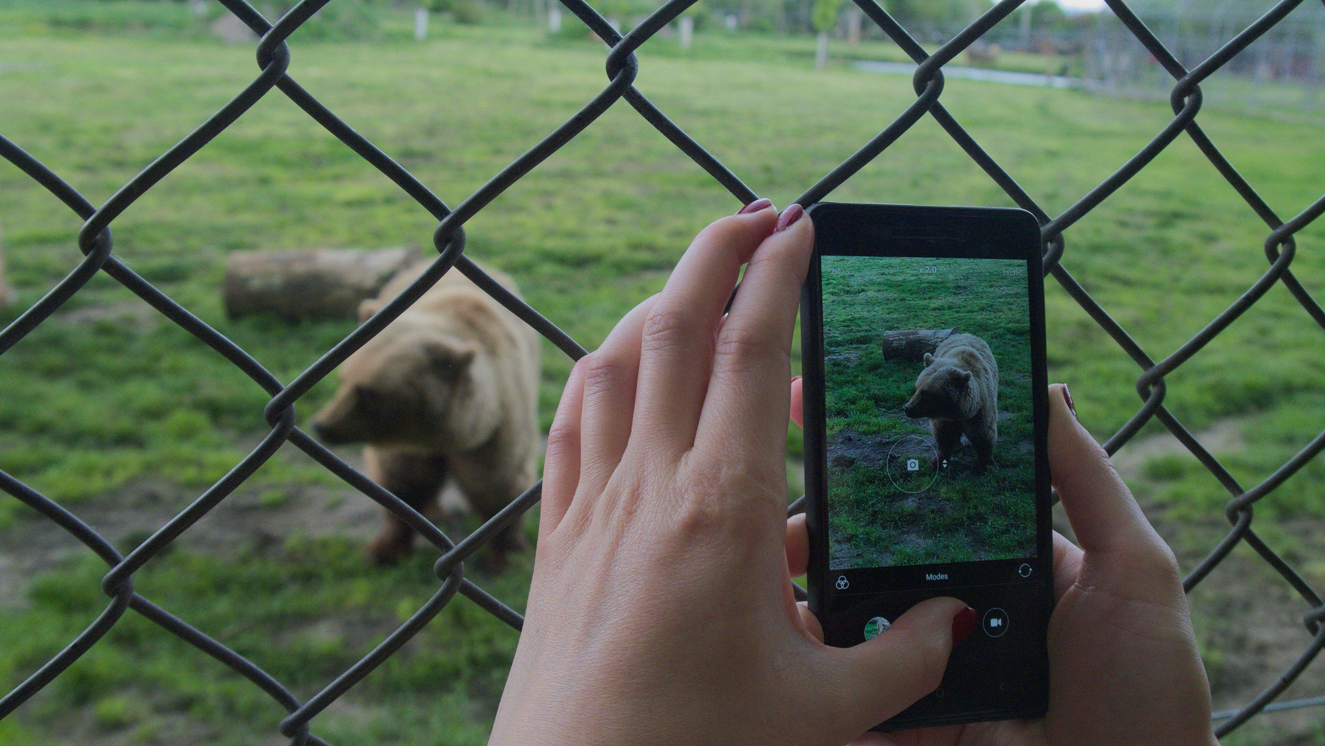 Free stock photo of bear, smartphone