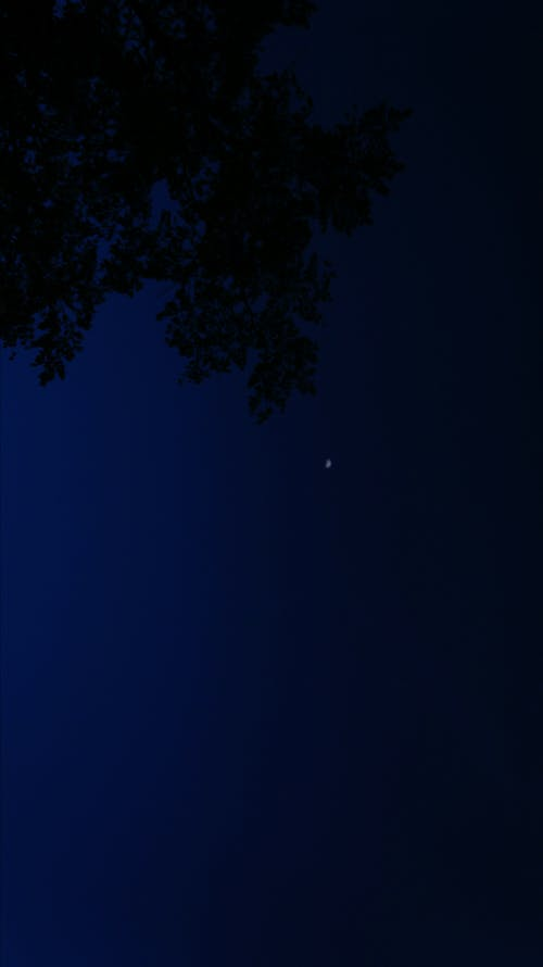 Free stock photo of bliss, blue, night sky