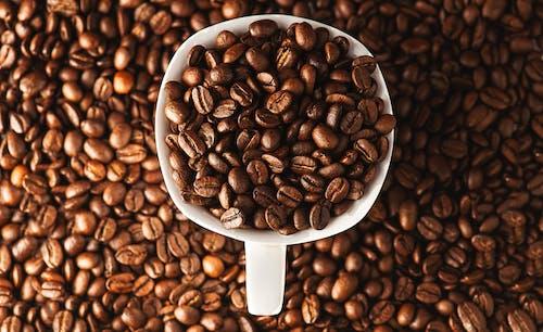 アラビカ, カネフォラ, カフェイン, コーヒーの無料の写真素材