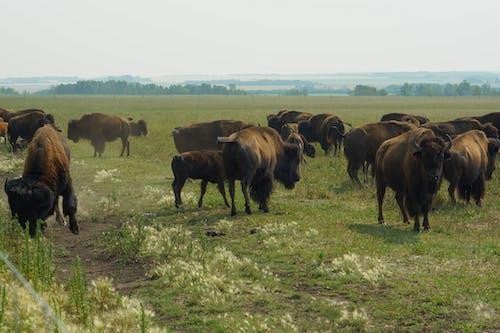 Ingyenes stockfotó állatállomány, állatfotók, állatok témában