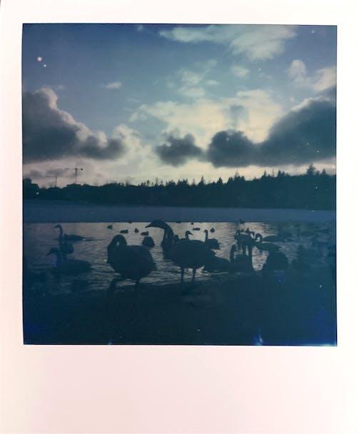 Imagine de stoc gratuită din apă, apus, călătorie, faleză