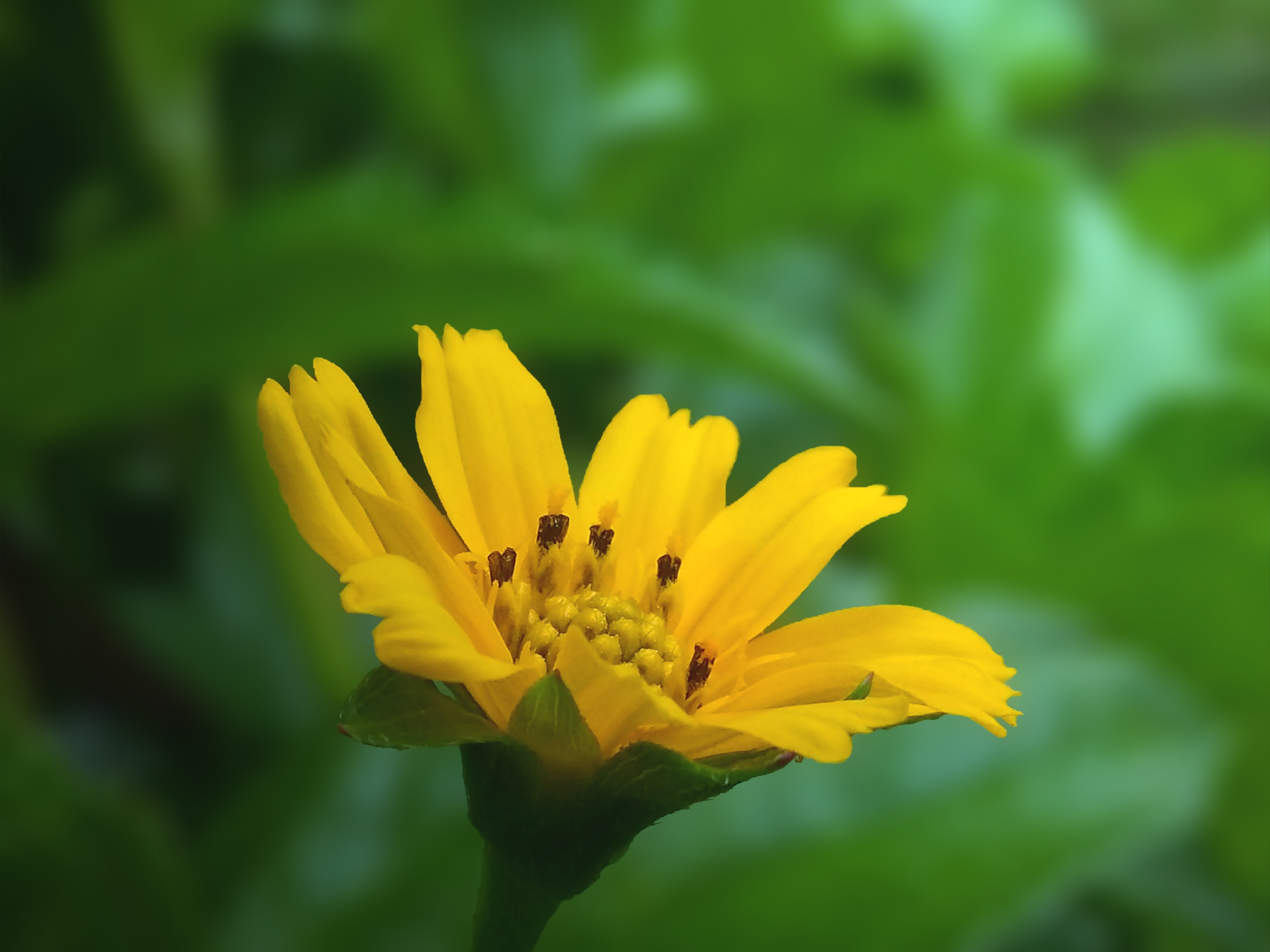 Free Stock Photo Of Beautiful Flowers Bokeh Flower