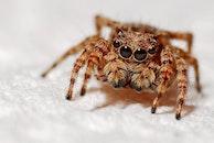 animal, macro, spider