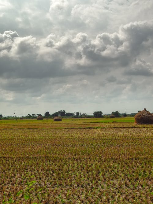 Free stock photo of agriculture, clouds, dark clouds, farm