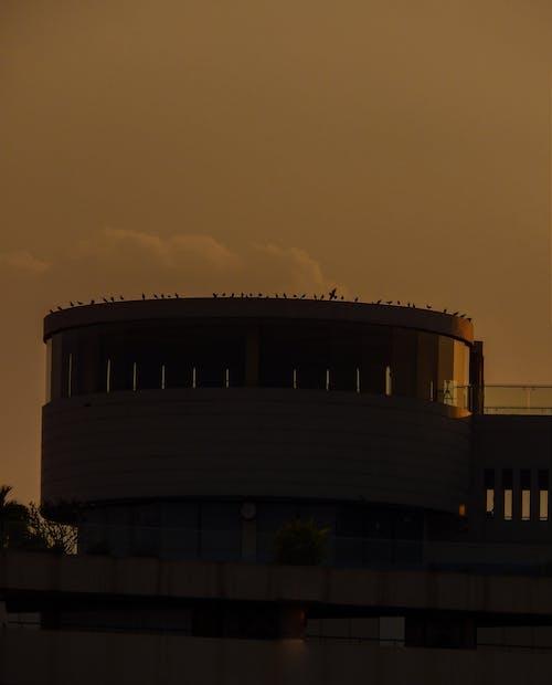 Free stock photo of alignment, architectural design, birds, dark