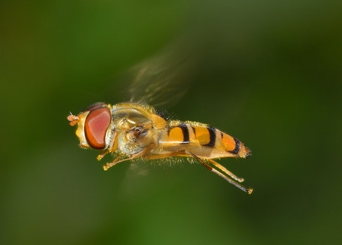 Orange and Yellow Insect