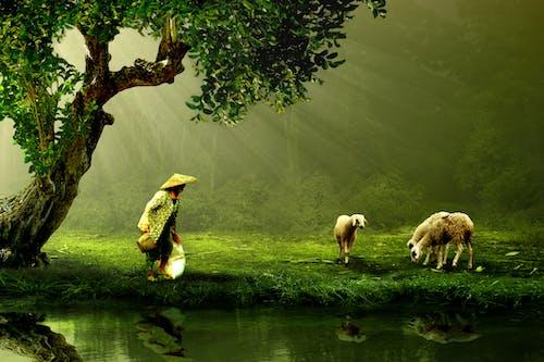 Imagine de stoc gratuită din animale, apă, arbori, cioban