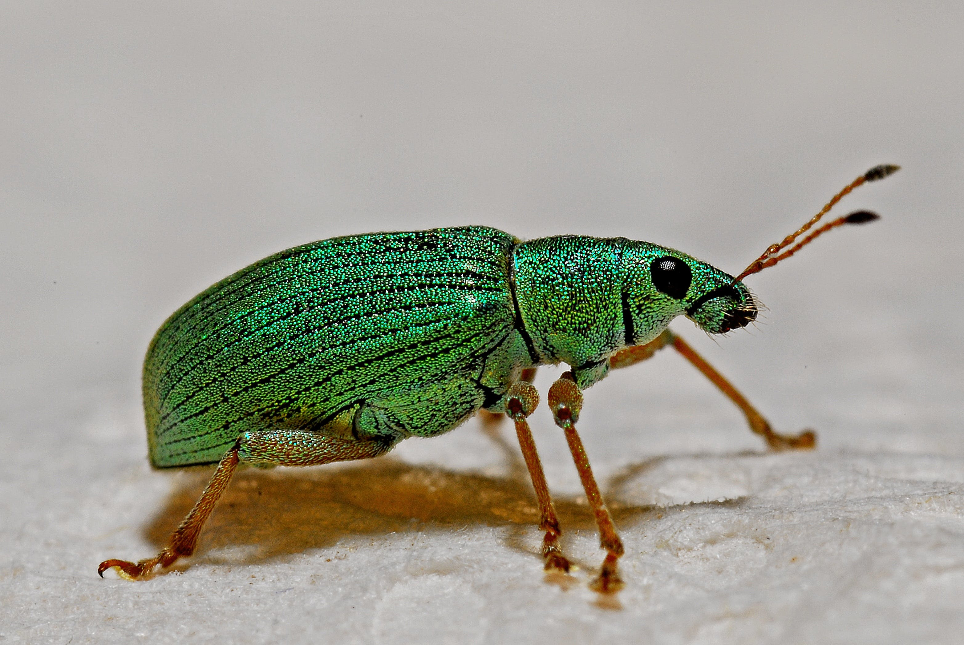 Green Black and Brown Insect