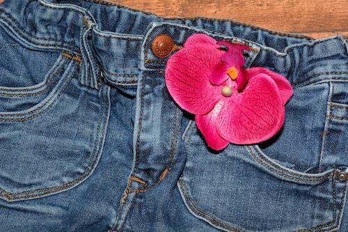 Foto d'estoc gratuïta de flor, florir, orquídia, pantaló