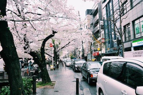 Ingyenes stockfotó autó, belváros, cseresznyevirág, elhelyezkedés témában