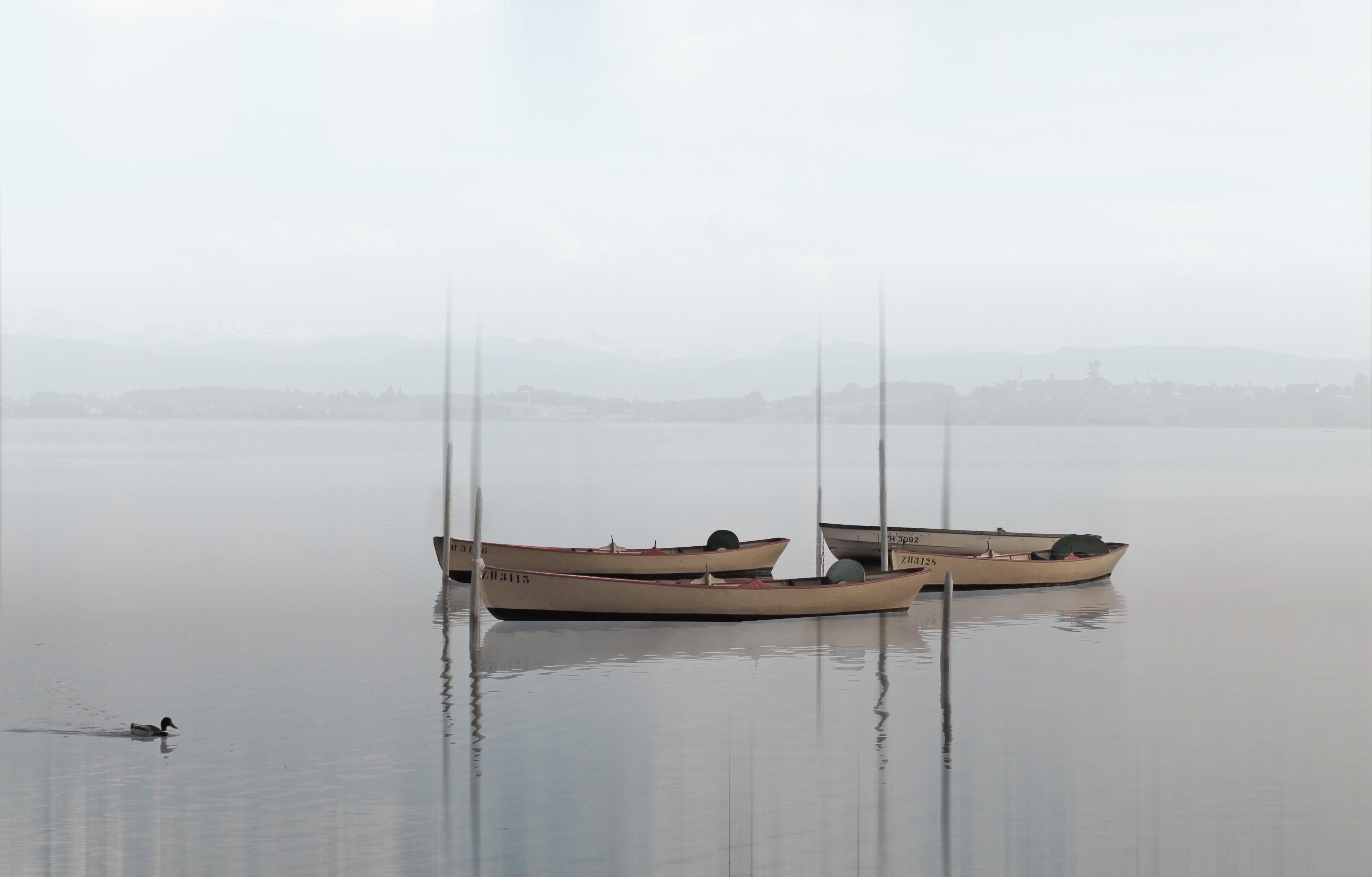 4 White Canoe on Calm Body of Water