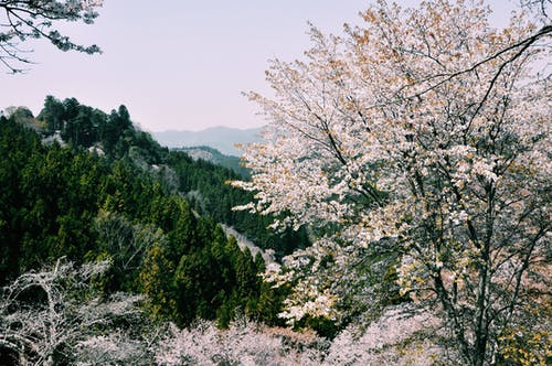 Blooming trees growing in spring forest
