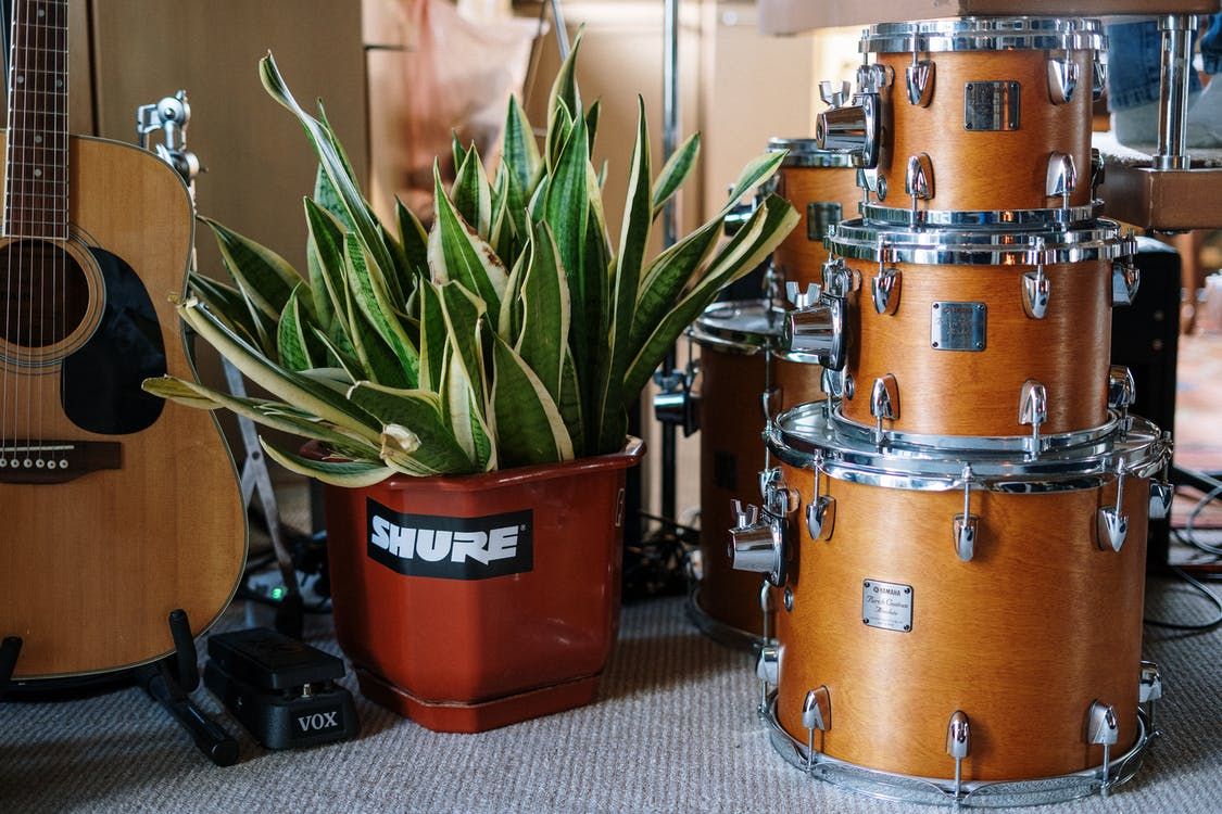 Green Plant on Orange and Silver Drum