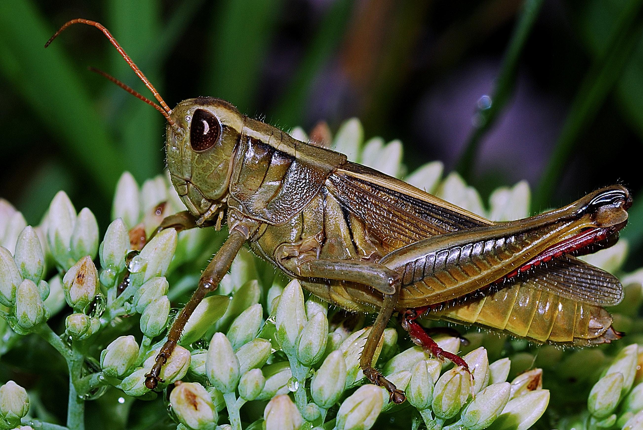 green grasshopper · free stock photo