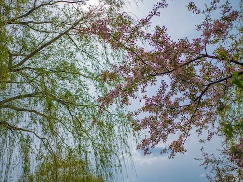 ローアングル, 太陽, 枝, 空の無料の写真素材
