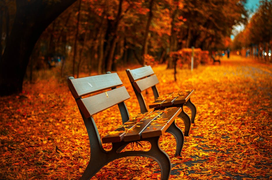 autumn, avenue, bench - The Book People