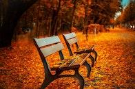 bench, trees, path