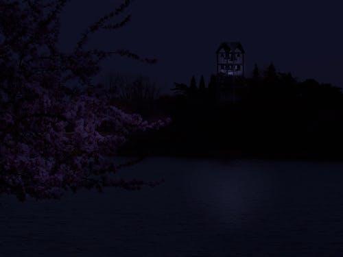 ダーク, フォトショップ, 光, 反射の無料の写真素材