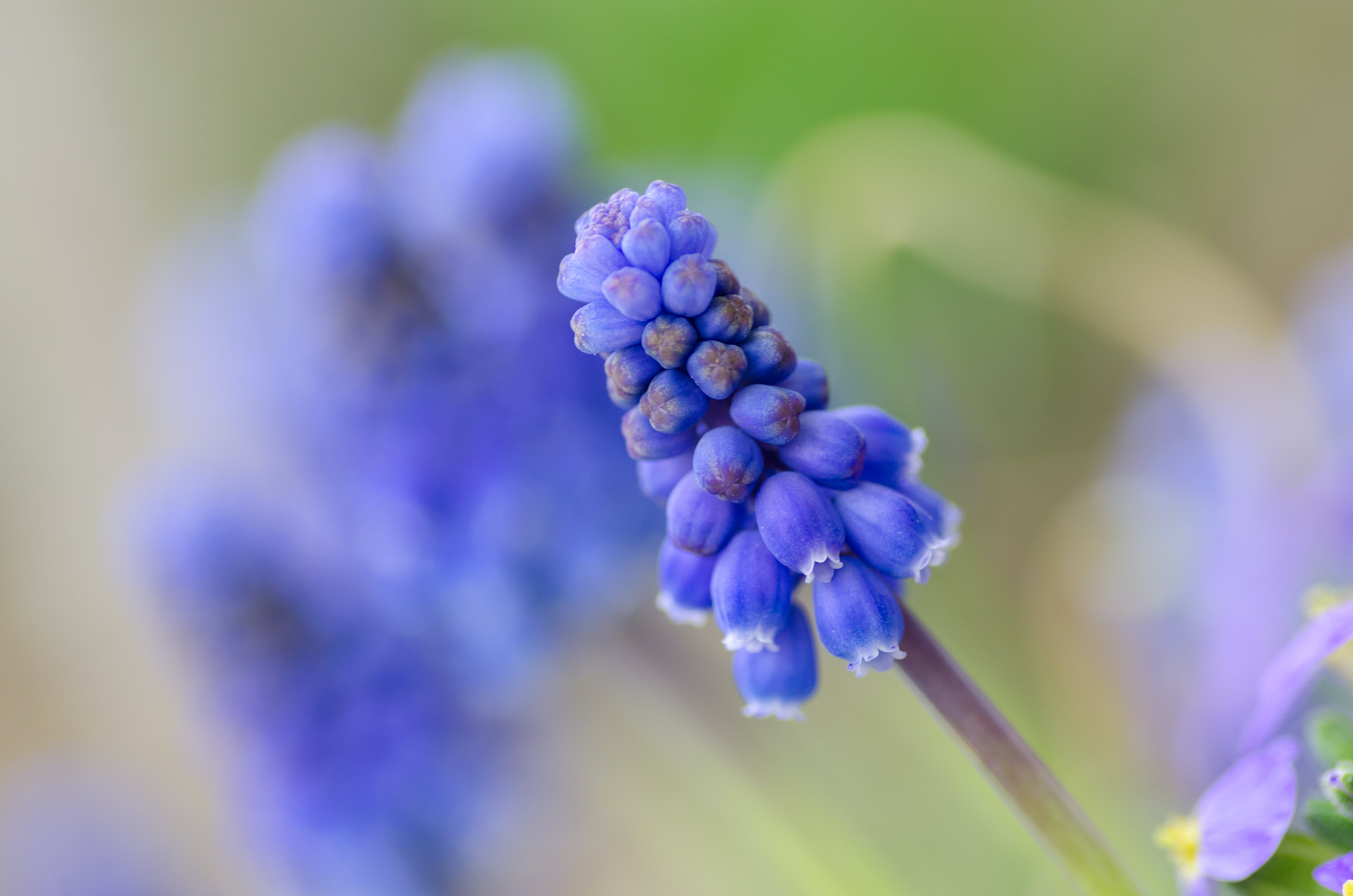 Selective Focus of Purple Flower