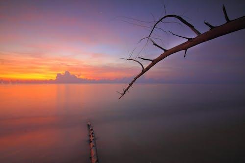Immagine gratuita di acqua, alba, albero, ambiente