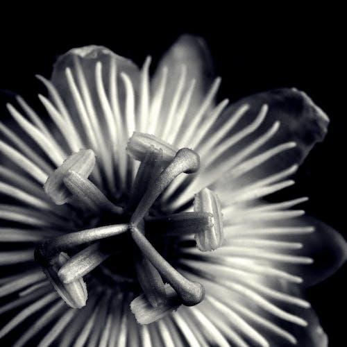 Kostenloses Stock Foto zu aromatisch, baum, blühen