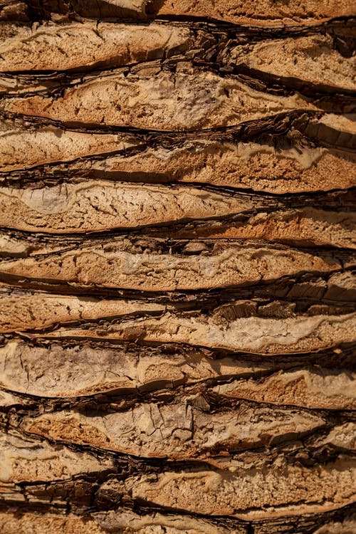 Free stock photo of background, bark, brown, close-up