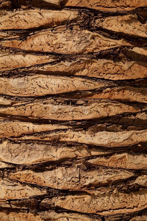 abrupte, amb textura, arbre