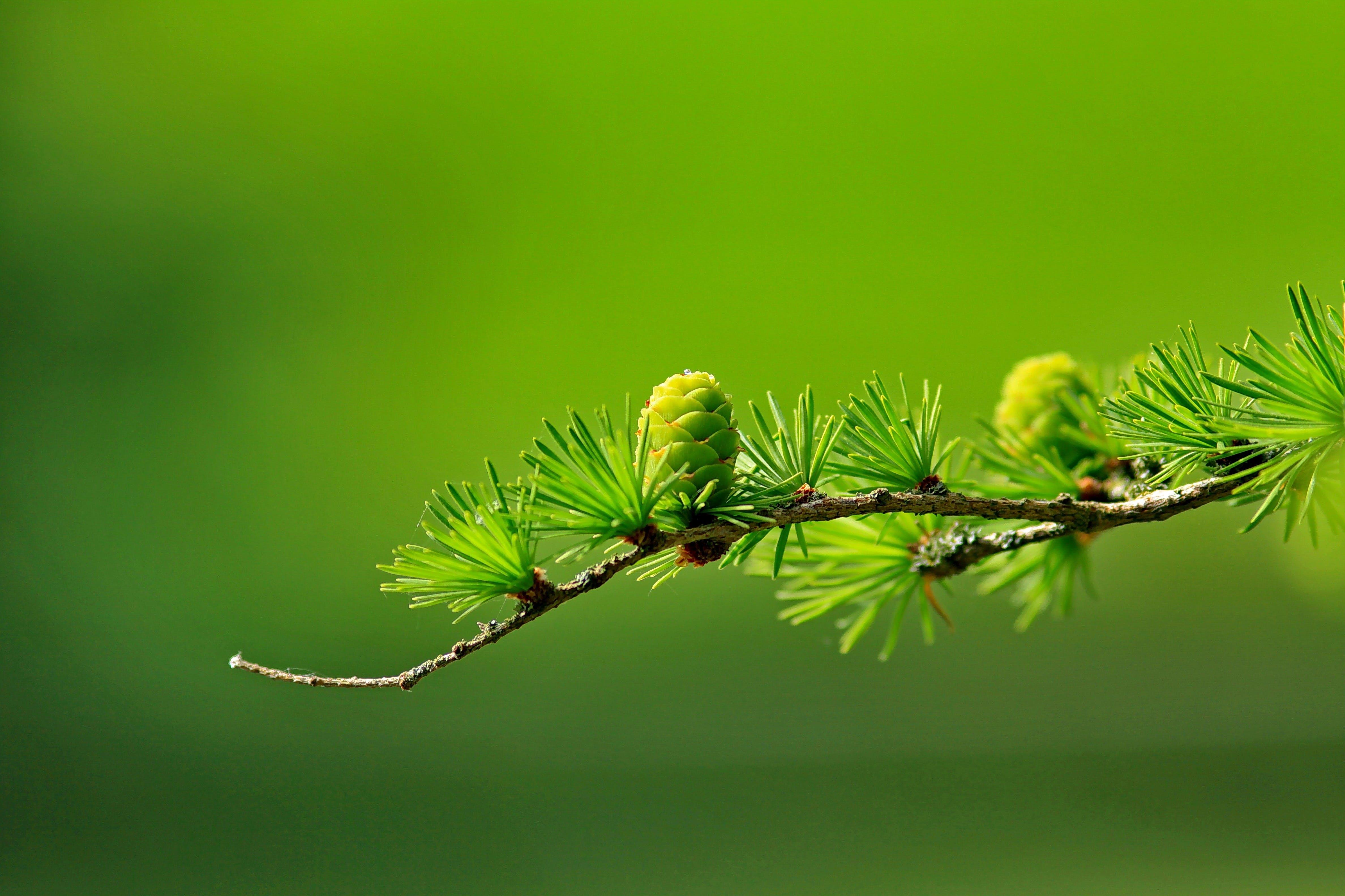 Green Tree Plant Leaves