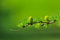 nature, leaves, green