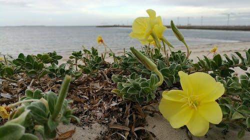 คลังภาพถ่ายฟรี ของ #flowers #bayside #ocean #beach #jetty