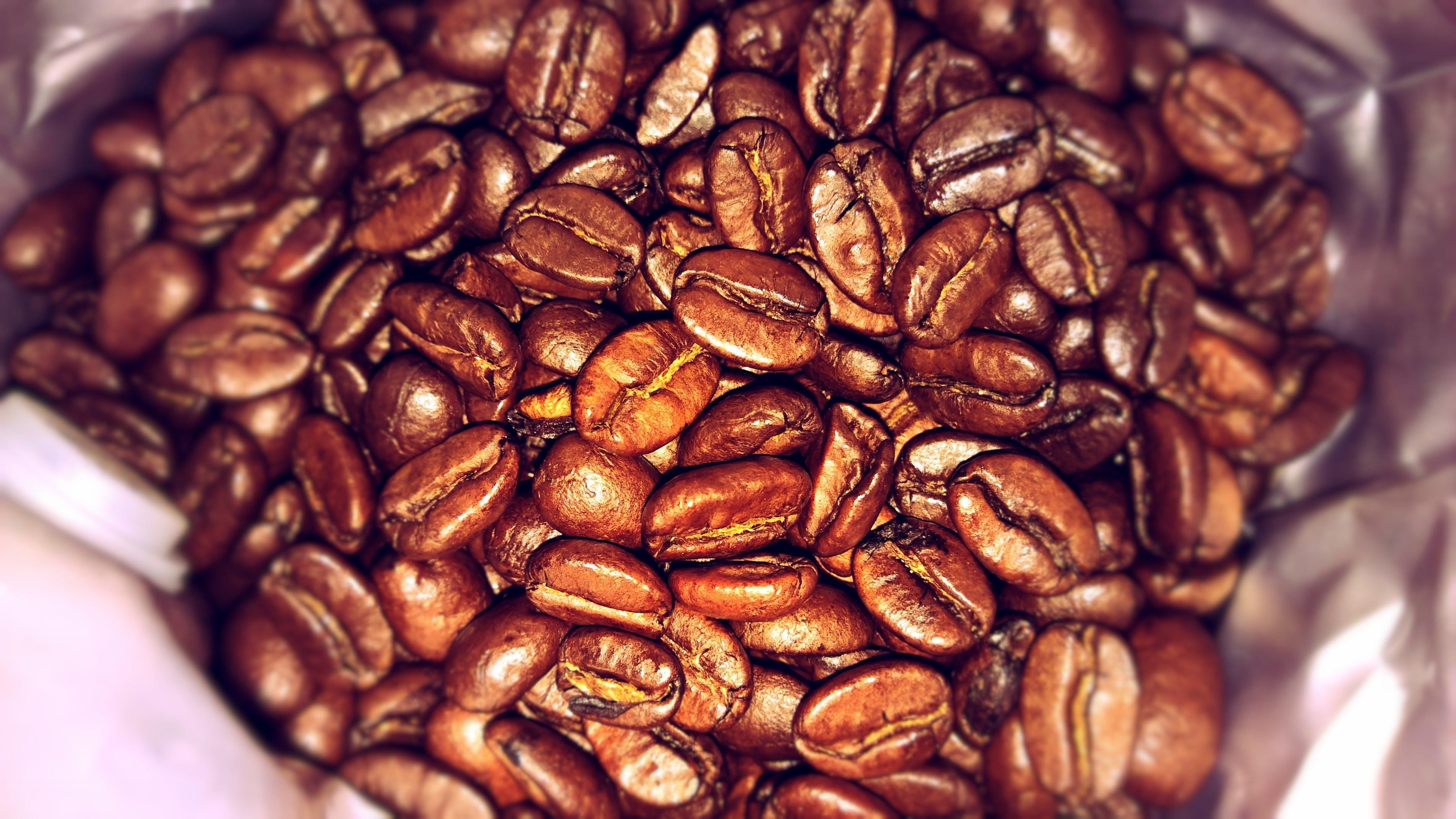 Free stock photo of brew, coffee, coffee bean