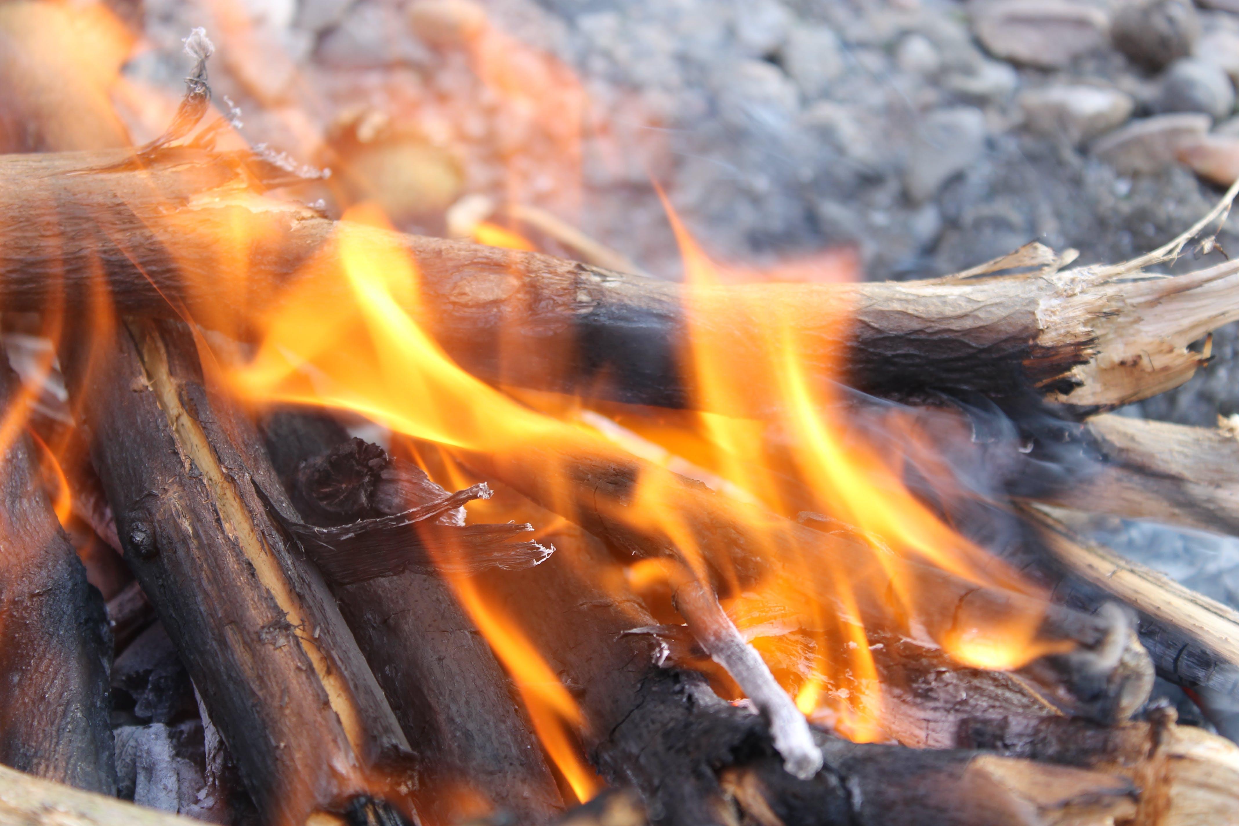 Free stock photo of burn, burning, driftwood, fire