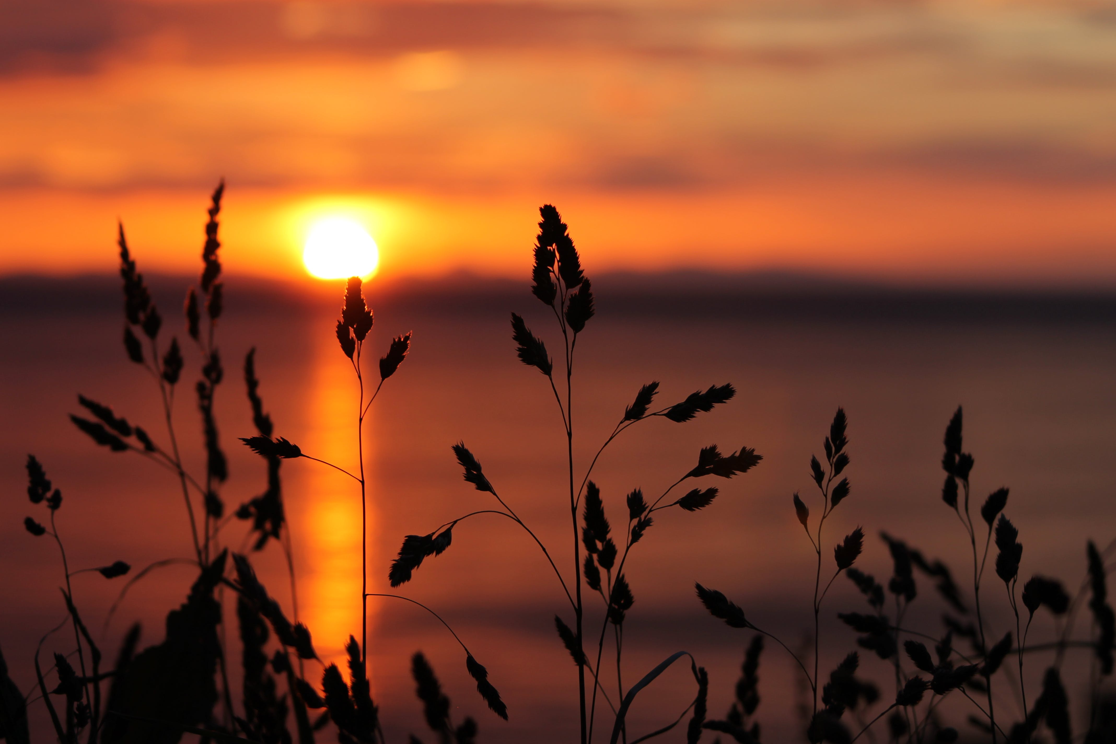 Free stock photo of seawater, summer, sunset