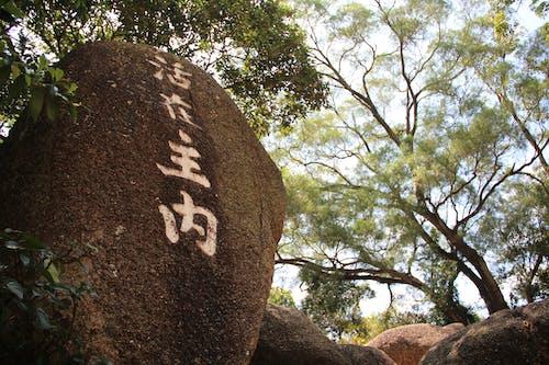 Foto profissional grátis de árvores, pedra, rocha