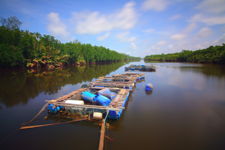 Kostenloses Stock Foto zu anlegesteg, bäume, boot, exotisch