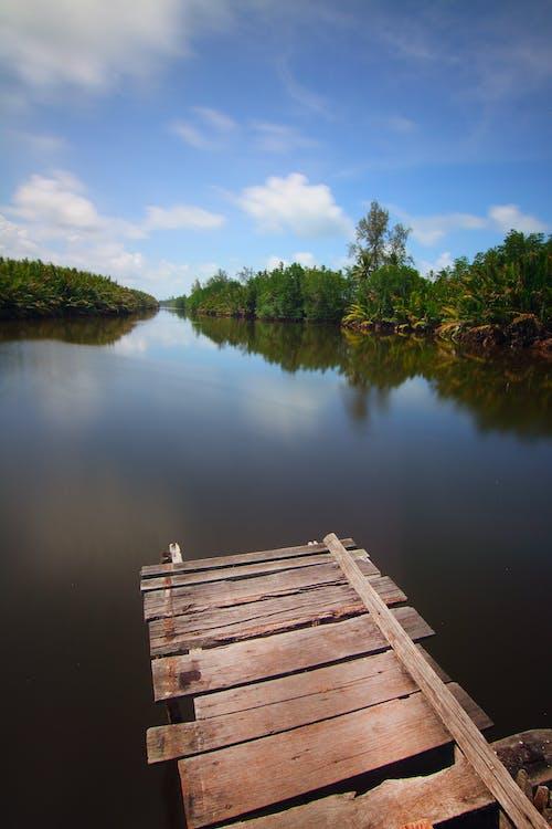 Fotobanka sbezplatnými fotkami na tému idylický, les, lesy, malebný