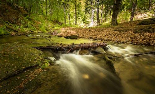 Бесплатное стоковое фото с бревно, вода, водопад, движение